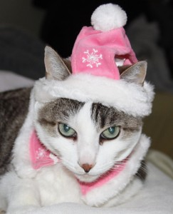 Gracey in Pink Santa hat