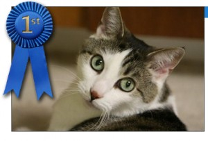 Gracey's winning photo in the Bissell MVP Pet Photo Contest