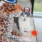 Gracey and Lazy Leopard on  4th of July