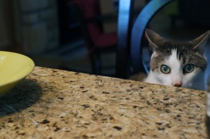 Gracey ready to pounce on counter