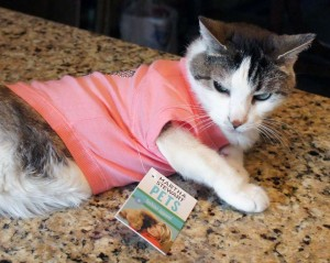 Gracey The Tiniest Tiger in a Martha Stewart Pet Tshirt