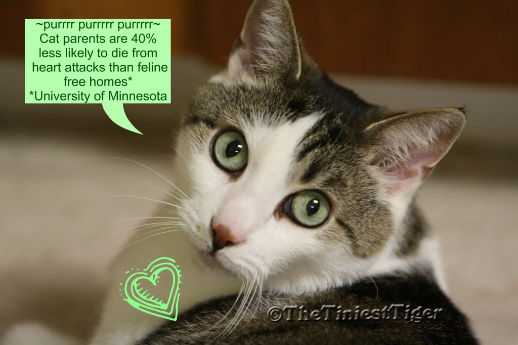 Gracey, The Tiniest Tiger says ~Purr it up for our Parent's health~