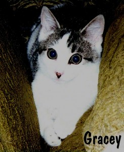 Gracey's kitten photo