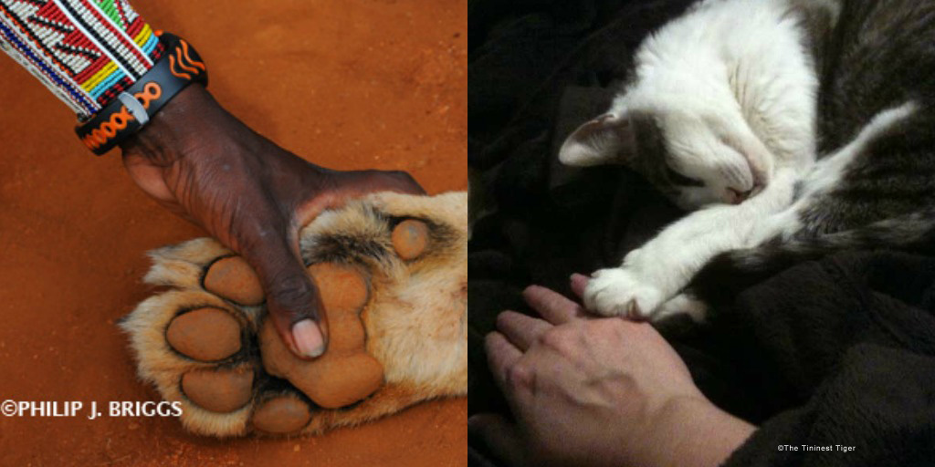Philip J. Briggs Lion Paw and Gracey Paw