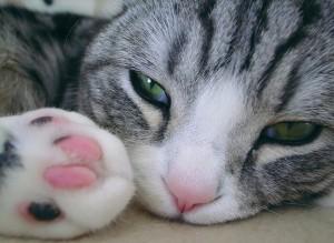 Pink Nose and Toes