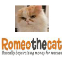Romeo the Cat badge