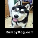 Rumpydog.com badge