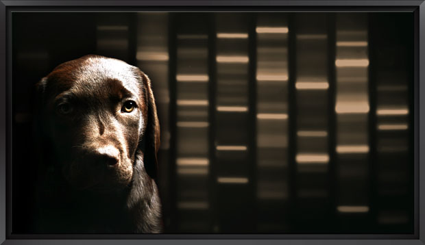 Signature DNA Dog