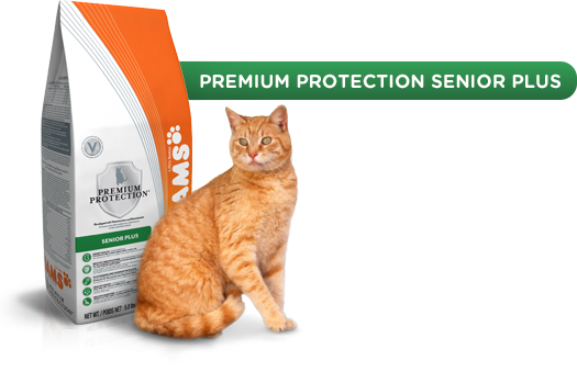 premium protection senior plus cat