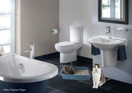 Bathroom Chat  Litter Box Tips