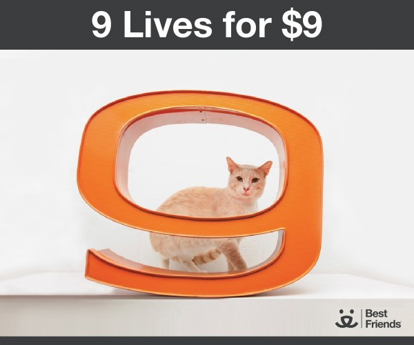 Best Friends 9 Lives for $9
