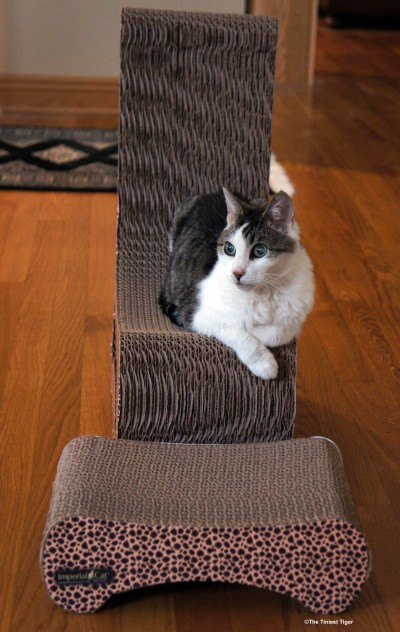 Gracey on Imperial Cat Chair and Ottoman