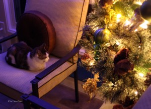 Gracey looking at the Christmas Tree