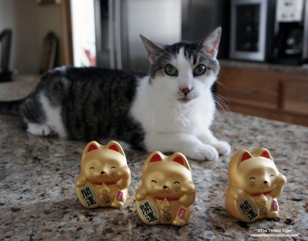 Gracey and 3 Maneki neko