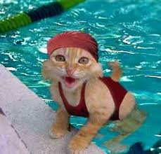 cat in bathing cap
