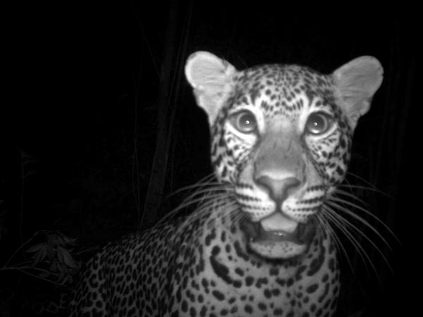 Leopard selfie National Geographic
