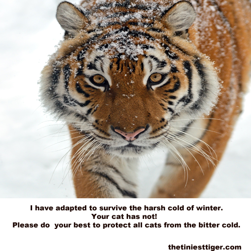 Amur PSA about winter