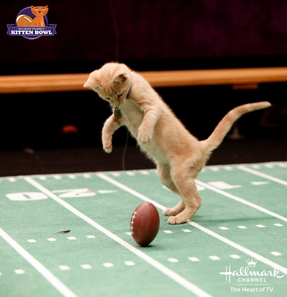 Kitten Bowl orange kitten