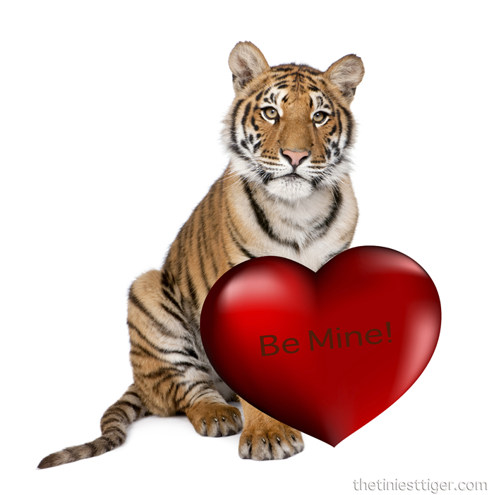 Be Mine Valentine Tiger
