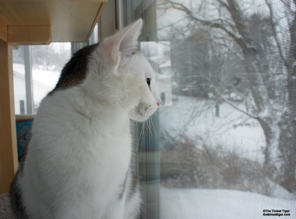 Annie looking at snow
