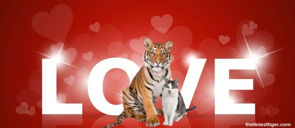Love with Gracy and Tiger