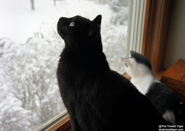 Mercy and Eddie watching birds