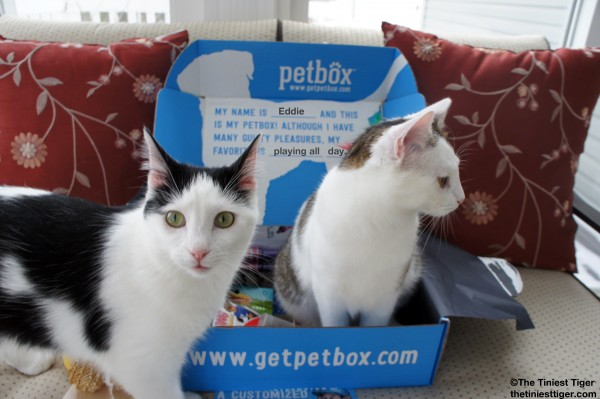 Eddie wants in the PetBox