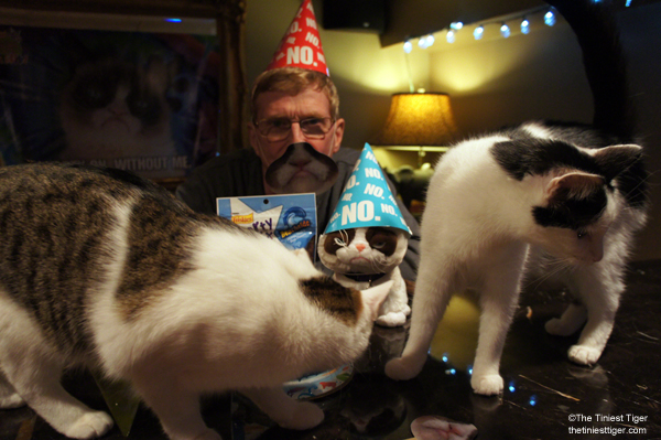 Paul Grumpy Cat PArty