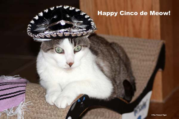 Gracey Cinco de Meow
