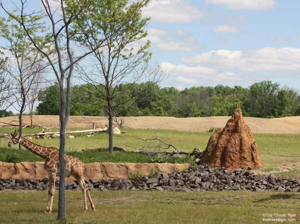 Termite mound and giraffe at Columbus Zoo