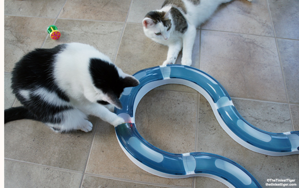 CatIt design senses Super Roller Circuit Cat Toy