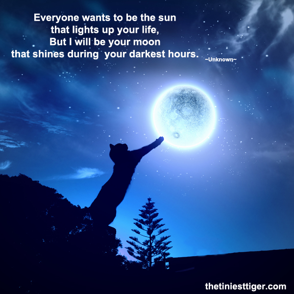 cat reaching for moon quote