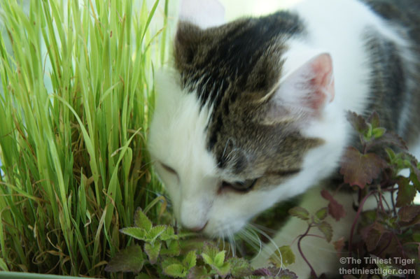 Annie in the catnip