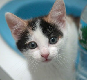 Gracey from Kitten Associates