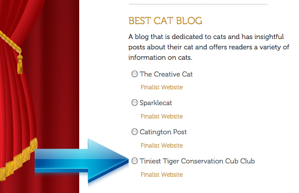 Screenshot 2014 Best Cat Blog