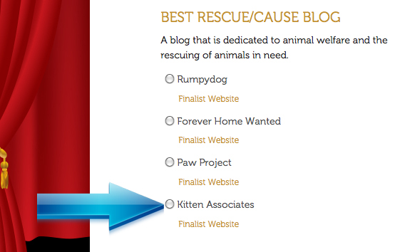 Screenshot 2014 Best Rescue Blog