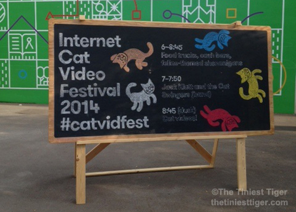 catvidfest chalk board