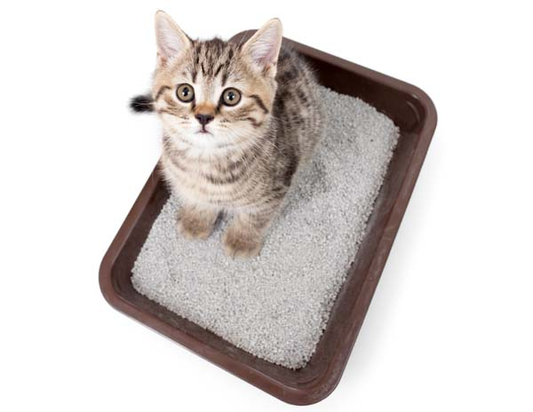 cute kitten in litter pan