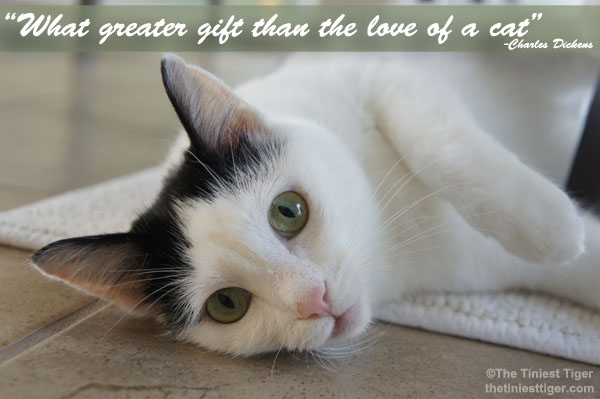 What Greater Gift Than The Love of a Cat #AdoptAShelterPet Month