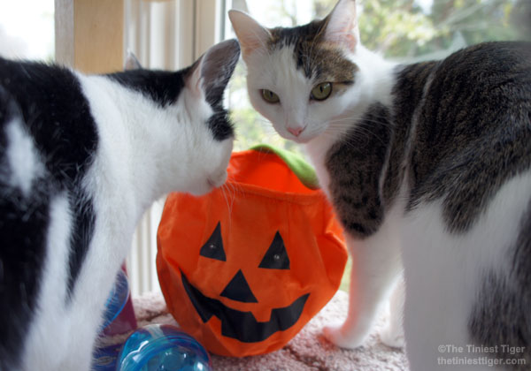Eddie and Annie with Jack O'Lantern