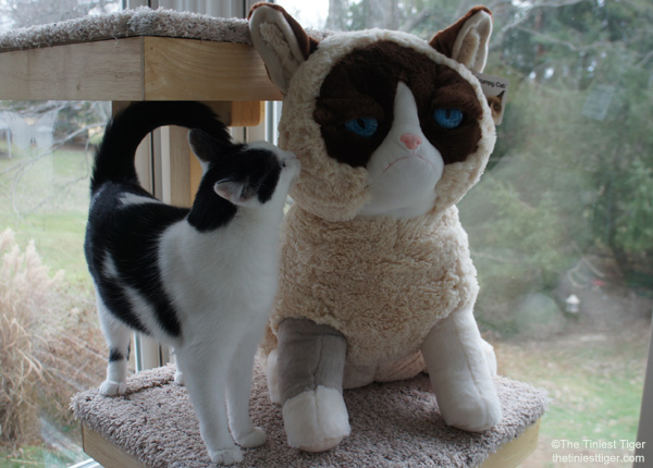 Eddie and Gund Grumpy Cat