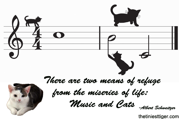 Music and cats quote