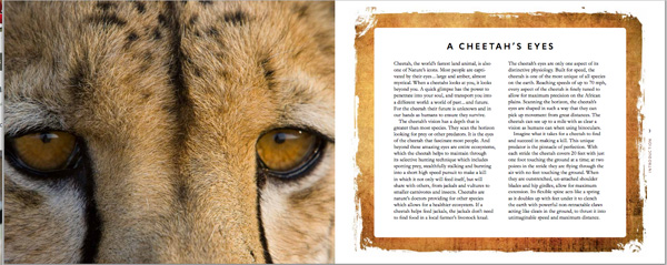 cheetah book image 1