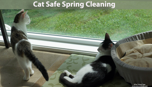 Cat Safe Spring Cleaning