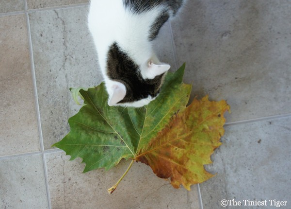 Annie and the big leaf