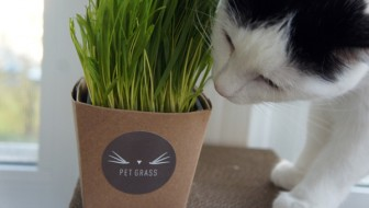 Cats Love Whisker Greens #PetGrass