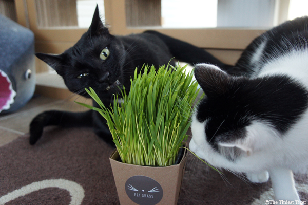 Mercy and Eddie #petgrass #ad