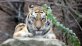 Solar Energy Helping People and Tigers Coexist