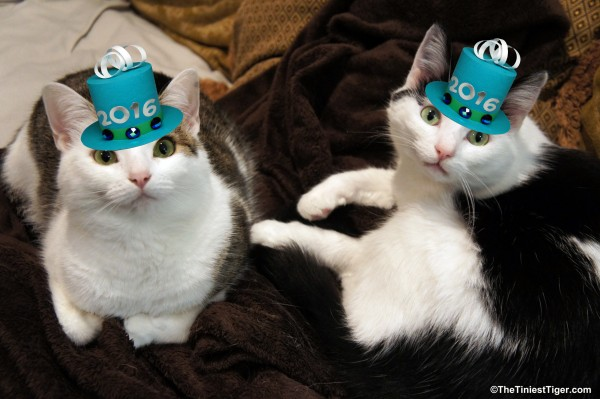 Annie and Eddie Tiny Hats for Tidy Cats