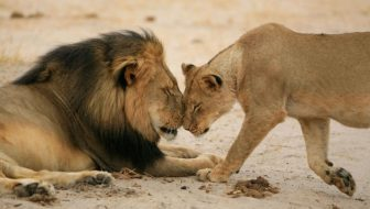 Beyond Cecil: Securing a Future for Lions  Register today!